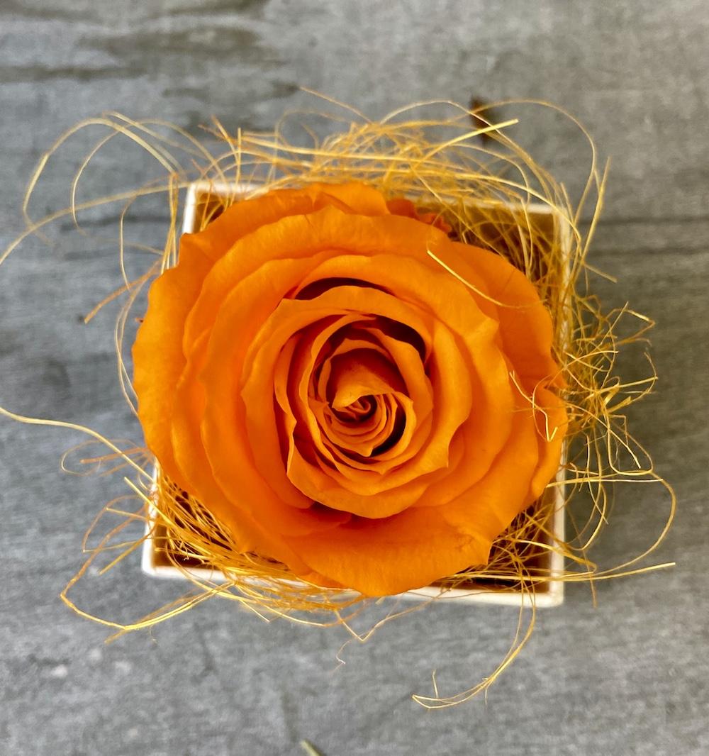 arancioflower box rose stabilizzate florashopping Rossana flower store NovellinoIMG_0469