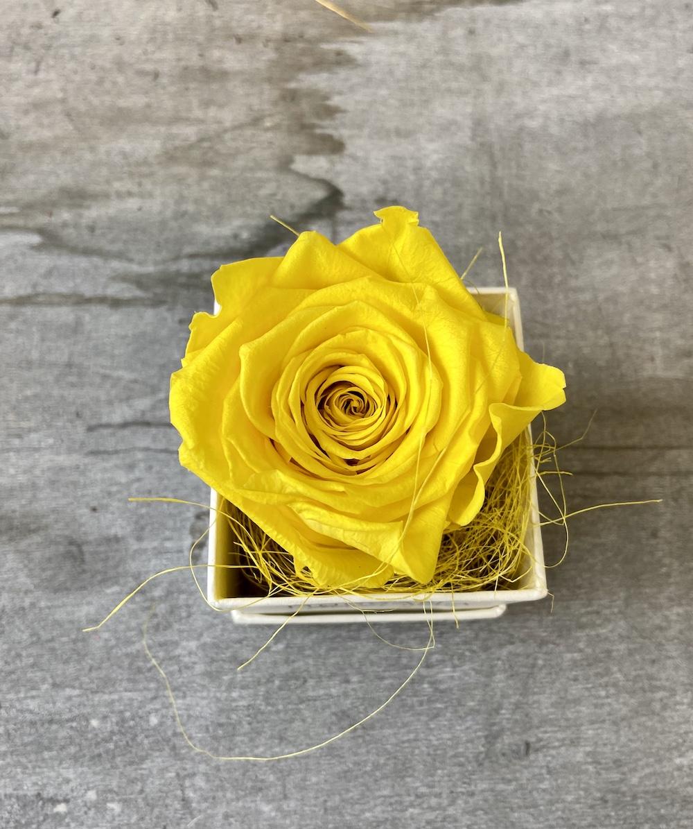 flower box rose stabilizzate gialle florashopping Rossana flower store NovellinoIMG_0484